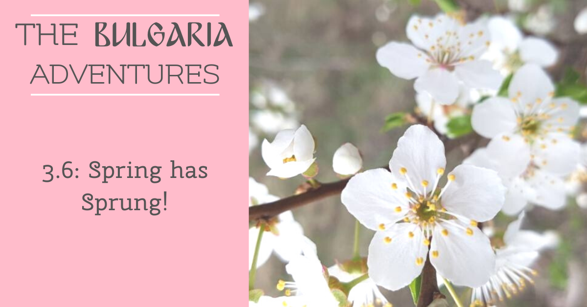 The Bulgaria Adventures 3.6: Spring has Sprung